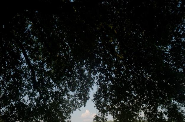 07-5 Trees L1031145
