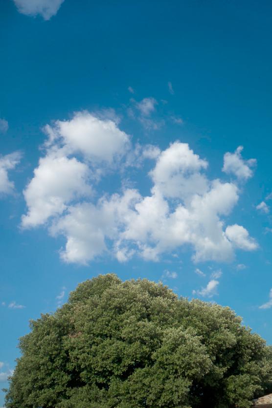 09-5 tree L1032949