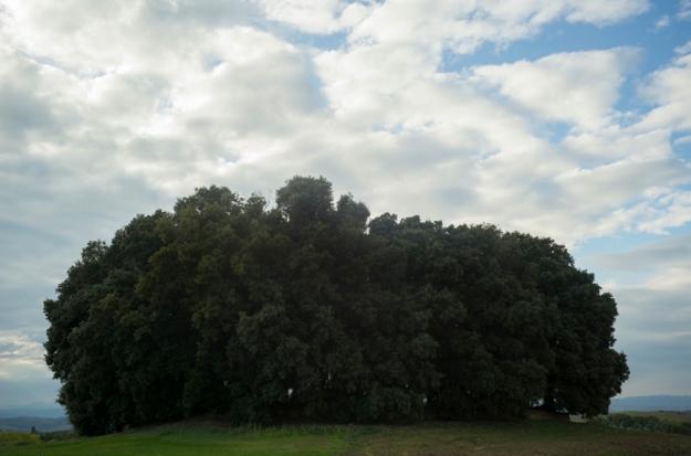 10-13 trees L1001950