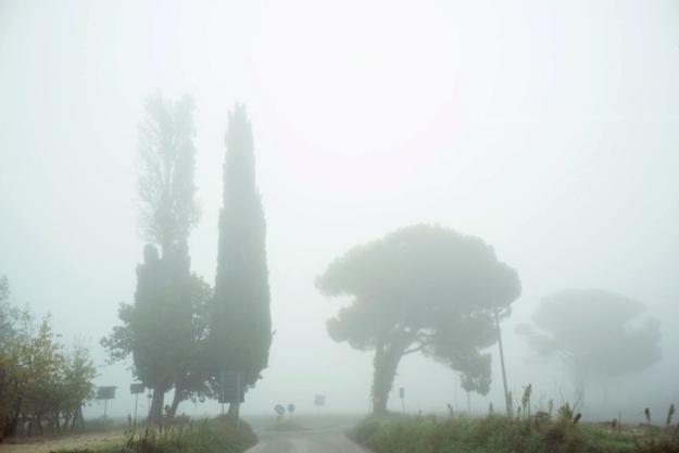 10-22 Trees L1002069
