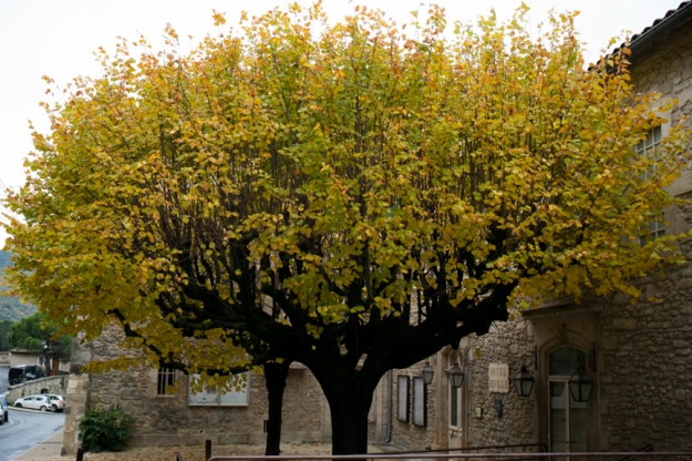 11-19 tree L1002941