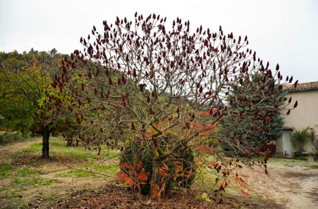 11-20 tree L1002946