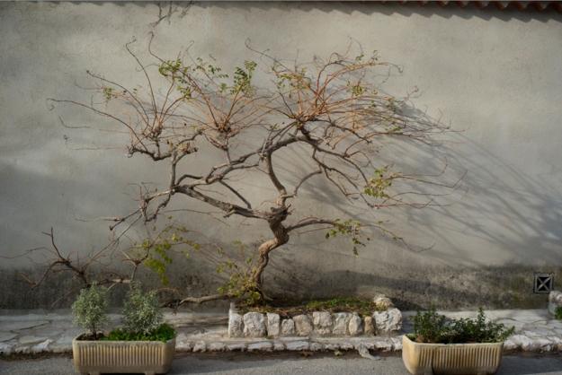 11-22 tree L1003015