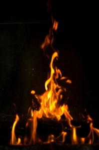 11-27 Firetree L1003185
