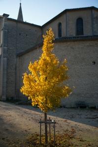 11-27_Yell tree L1003193