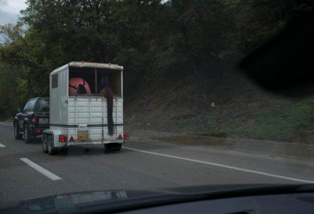 11-4 Horse L1002484
