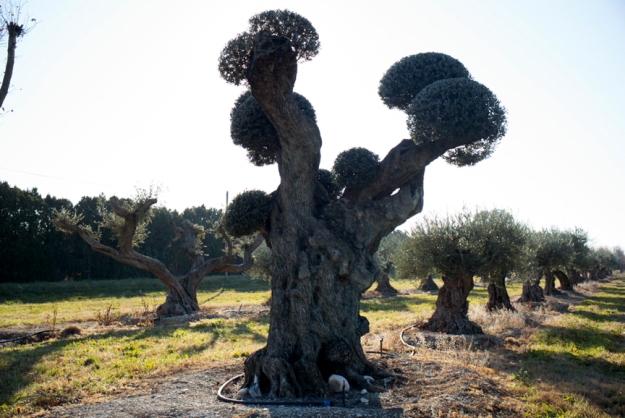 12-15 Tree L1003454