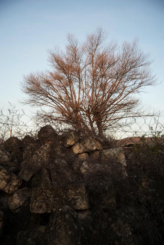 12-30 Tree rocks L1003773